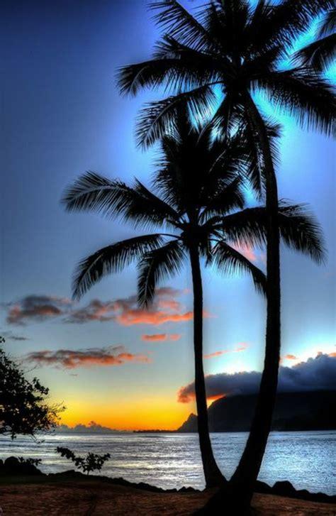 schöne bilder sch 246 ne bilder palmen blauer sch 246 ner hintergrund b 228 ume bl 228 tter palmen w 228 lder
