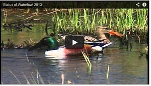 Service Proposes Liberal Waterfowl Hunting Season