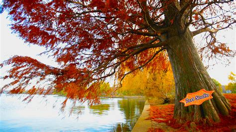 Autumn Animated Wallpaper - fall screensavers and wallpaper wallpapersafari