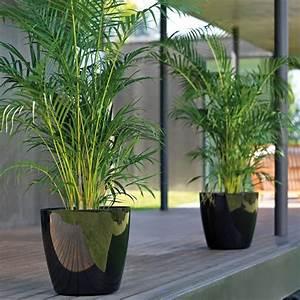 Pot Pour Plante : plantes en pot pour exterieur cache pot rectangulaire haut maison retraite champfleuri ~ Teatrodelosmanantiales.com Idées de Décoration