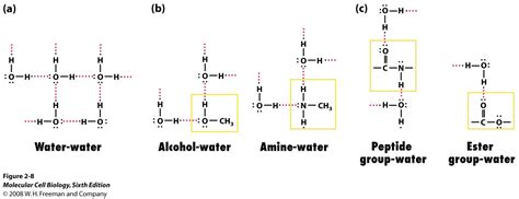 Hello. Can someone help me with drawing hydrogen bonds ...