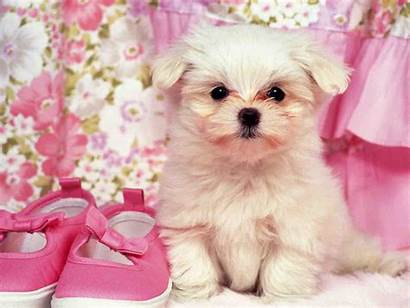 Puppy Dogs Girly Wallpapers Sweet Doge Amazing