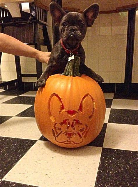 creative pumpkin carving ideas brit