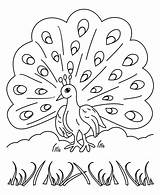 Peacock Coloring Pages Printable Sheets sketch template