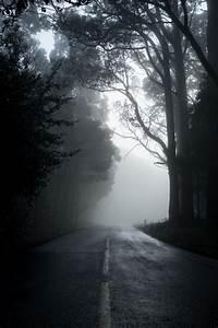 wallpaper forest road fog mood trees