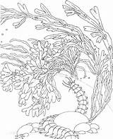Coloring Pages Coral Reef Sea Ocean Drawing Sponge Adults Barrier Snake Printable Adult Colouring Seascape Reefs Sketch Colorpagesformom Under Template sketch template