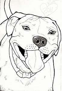 Pitbull Dog Drawing Face