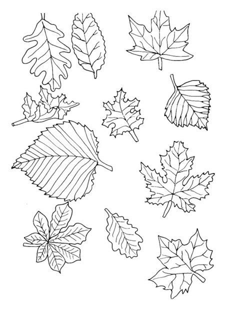 Kleurplaat Met Herfstbladeren Simpel by Bladeren Kleurplaat 187 Animaatjes Nl