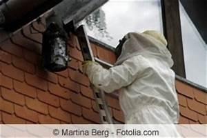 Wespen Unter Dachziegel : wespennest unter dem dach dachboden wie entfernen ~ Articles-book.com Haus und Dekorationen