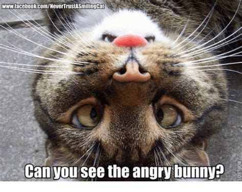 Angry Bunny Meme - wwwfacebookcomnevertrustasmiling cat can you see the angry