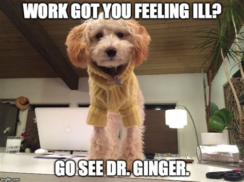 Dog Doctor Meme - image tagged in funny dogs thug dogs imgflip