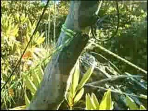 Hammock Setup Without Trees by One Tree Hammock Setup