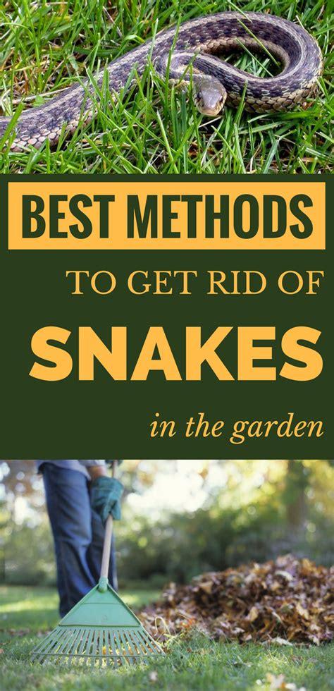 how to get rid of garden snakes best methods to get rid of snakes in the garden