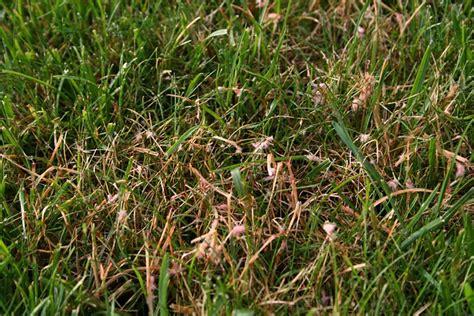 Pilze Im Rasen Anzeichen uebigau gartenbau frauenfeld fotogalerie