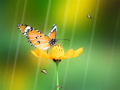 Animated Butterfly Wallpaper Free - animated butterfly wallpaper wallpapersafari