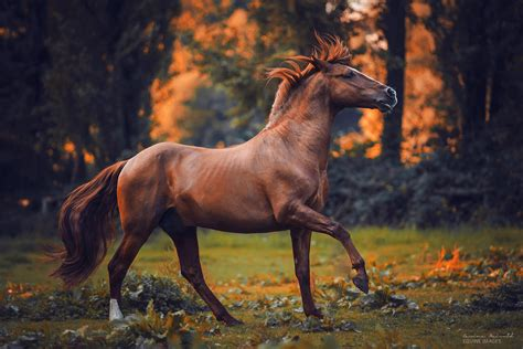 horse photographer carina maiwald shadows