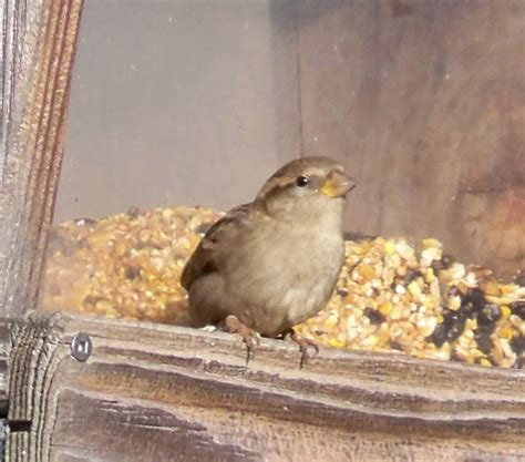 Cornell Great Backyard Bird Count by Guernsey Soil Water Conservation District Great