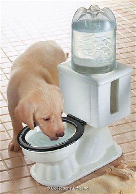 puppy drinking  toilet water bowl luvbat