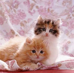 Of Cute Dogs Pets Cats And Kittens Pictures Wallpapers ...