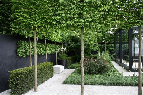 garden trees david dangerous pleached trees stilted trees raised hedging