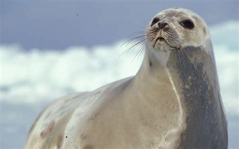 Home  Seals & Sealing Network