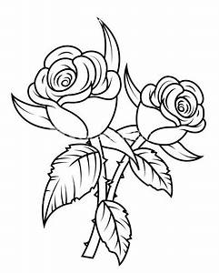 White Flower clipart white rose - Pencil and in color