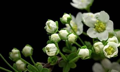 Plant Plants Timelapse Tropisms Macro Tropism Flowers