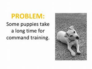 Problems and solutions for dog house training for Dog house training problems