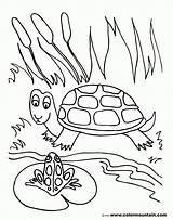 Coloring Pond Frog Habitat Printable Turtle Sheet Fish Ocean Sea Animals Template Gcssi Popular sketch template