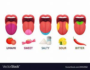 Tongue Taste Areas Sweet Bitter And Salty Tastes Vector Image