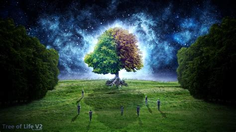 trees fantasy art digital art tree  life starry night