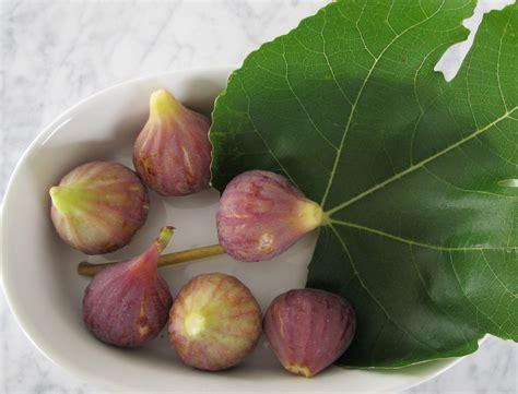 when are figs in season in season figs sugar talk