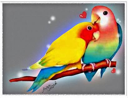 Birds Wallpapers Mobile Lovebirds Bird Panting Background