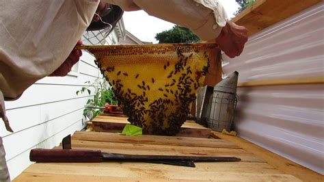 Top Bar Excluder - installing a excluder in a top bar hive