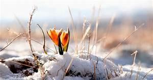 Blumen Im Winter : blumen und schnee im fr hjahr hd hintergrundbilder ~ Eleganceandgraceweddings.com Haus und Dekorationen