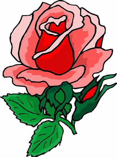 Clip Roses Rose Flower Domain Clipart Clipartix