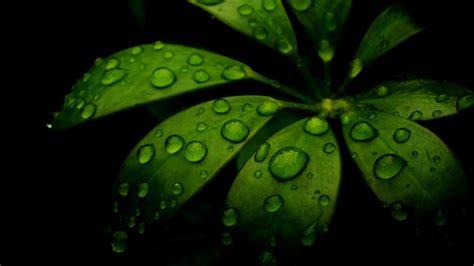 Daun hijau, batas daun hijau, sudut rendah tanaman daun hijau, perbatasan, bingkai, cat air daun png. Background hijau hitam 2 » Background Check All