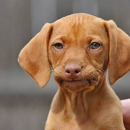 Dog Face Meme - awkward dog face meme generator
