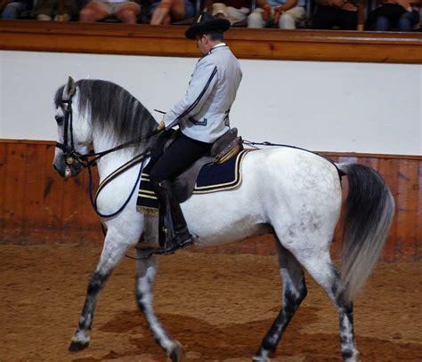 andalusian horses spain jerez equestrian frontera escuela horse spanish dressage wallpapers del royal andaluza arte hd gray cadiz andalucian ecuestre