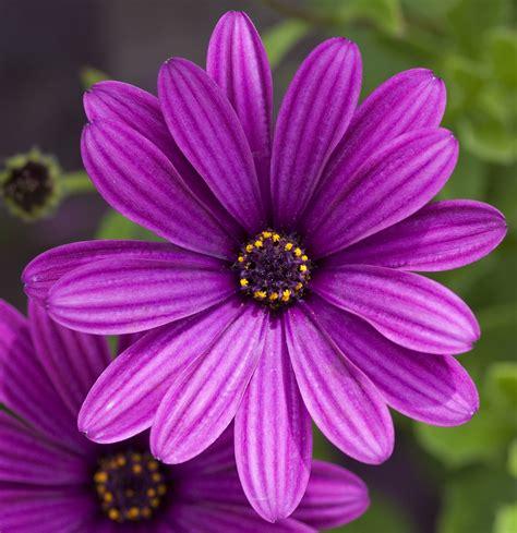 purple flowers file purple flower 4764445139 jpg