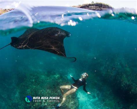 gamat bay nusa penida  snorkeling whatsapp