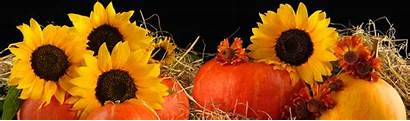 Sunflower Pumpkins Headers Pumpkin Website Sunflowers Header