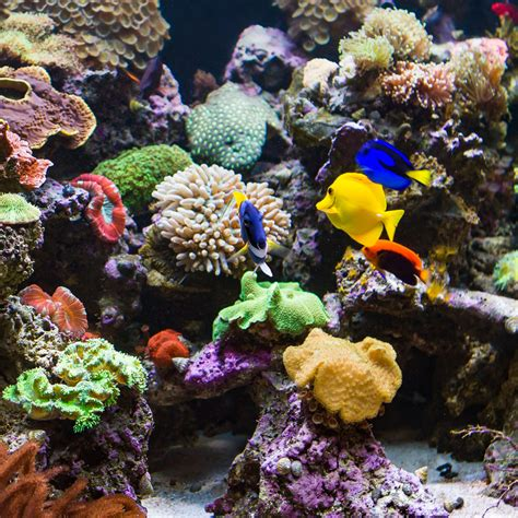 los angeles custom saltwater freshwater aquarium designs