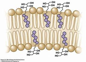 Bacterial Cell Membrane Structure