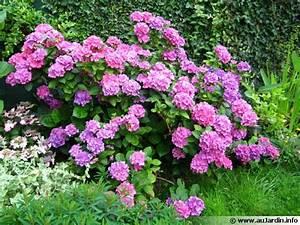 Plantes D Ombre Extérieur : plantes fleuries exterieur ombre ~ Melissatoandfro.com Idées de Décoration