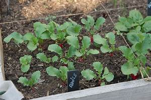 Semis De Persil : les semis poussent au potager en carr s ~ Dallasstarsshop.com Idées de Décoration