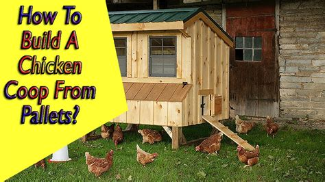 chicken coop ideas cheap how to build a chicken coop from pallets chicken coop