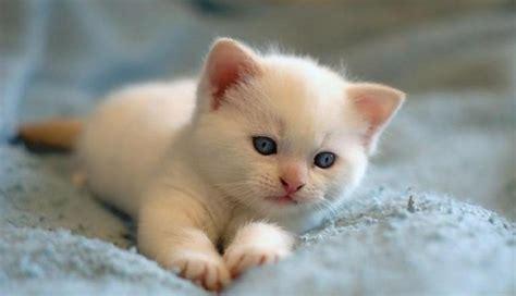 image chat mignon meilleur photo du chat mignon c est a vous de d 233 cider archzine fr