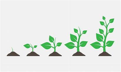 Growing Plants Vector Plant Clip Illustration Ground