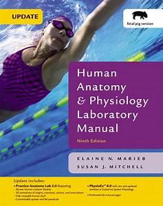 Marieb  U0026 Mitchell  Human Anatomy  U0026 Physiology Laboratory